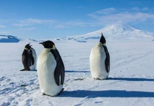 Antarcticascreen2