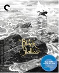 BlackStallioncover